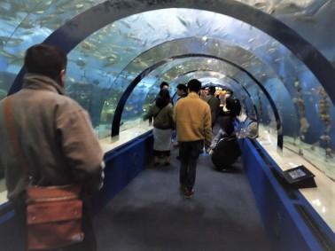 浅虫水族館2